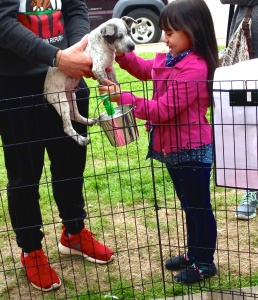 A little girl gets excited when her big brother allows her to pet Ruger, the pit bull mix.