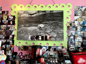 The inside walls of Bentley's Biscuits & Bones are lined with photographs of each dog that walks through its doors. Framed photos of Bentley accompany the collages on each side of the store.